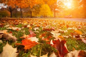 things to love about autumn
